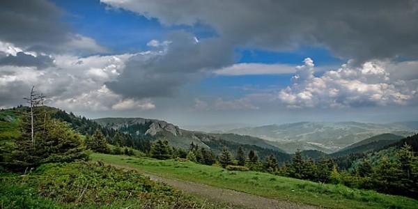 Kopaonik je jedan od značajnijih centara endemizma u Srbiji. Na području nacionalnog parka je utvrđeno prisustvo 825 biljnih taksona visokoplaninske flore, svrstanih u 292 roda i 80 familija, od čega 91 endemična i 82 subendemične biljke.  Prostor Kopaonika nastanjuju različite životinjske vrste. Fauna Kopaonika u celini i područja nacionalnog parka predstavlja najmanje istraženu dimenziju ovog prostora. Na području Kopaonika do sada je izdvojeno 14 vrsta vodzemaca, 13 vrsta gmizavaca, 166 vrsta ptica i oko 39 vrsta sisara.